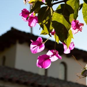 2014-01-20 Heast Castle, San Simeon 093