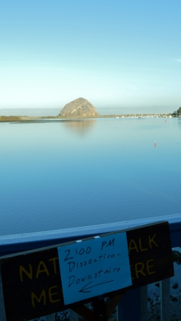2014-01-20 Morro Bay 016