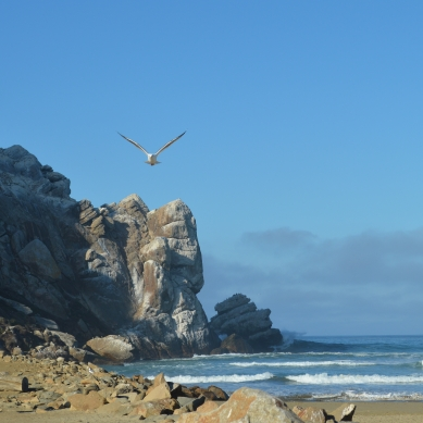 2014-01-20 Morro Bay 114
