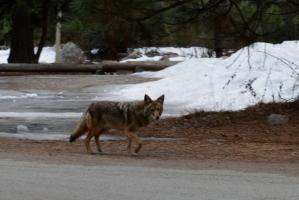2014-01-23 Yosemite 124
