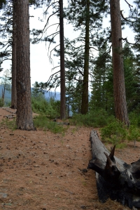 2014-01-23 Yosemite 214