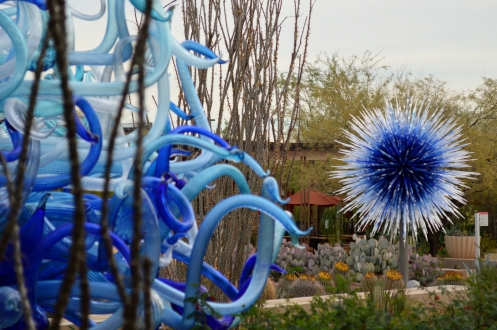 2014-01-30 Desert Botanical Garden 025