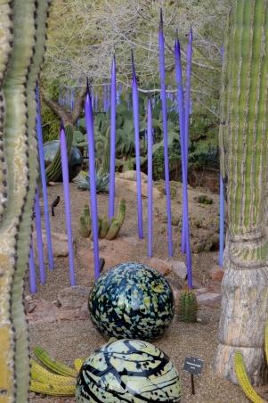 2014-01-30 Desert Botanical Garden 055