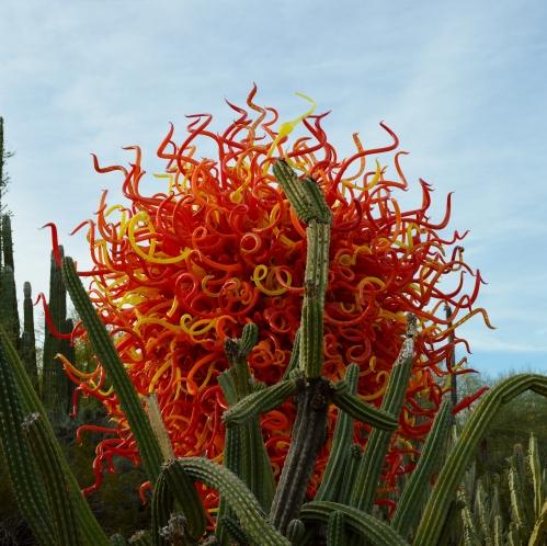 2014-01-30 Desert Botanical Garden 059
