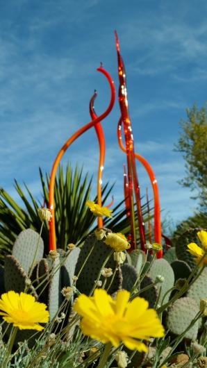 2014-01-30 Desert Botanical Garden 186