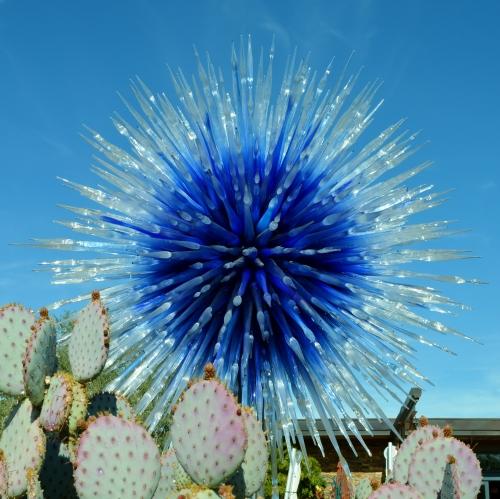 2014-01-30 Desert Botanical Garden 296