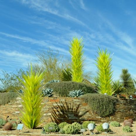 2014-01-30 Desert Botanical Garden 305