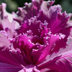 2014-01-30 Desert Botanical Garden 308