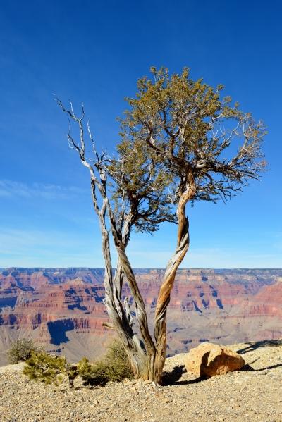 2014-02-13 Arizona 209